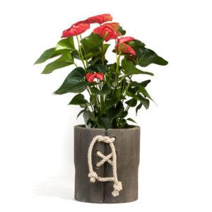 vase corpet 25n